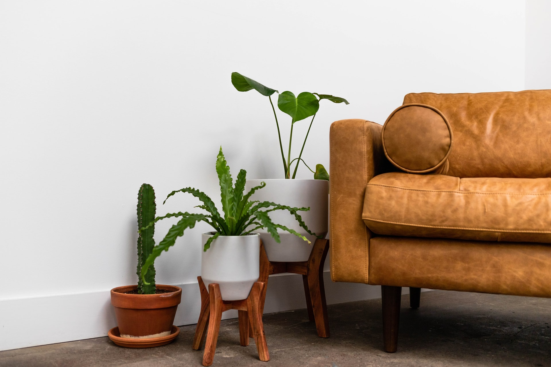 modern sofa with plants organized and styled in living room for feng shui and space optimization i